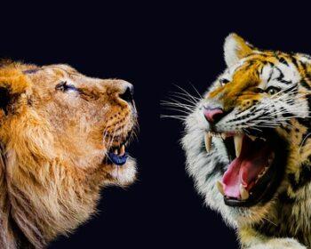 Konkurrenz: Dynalist als neue Outliner-Alternative fordert Workflowy heraus, wie ein Löwe den Tiger